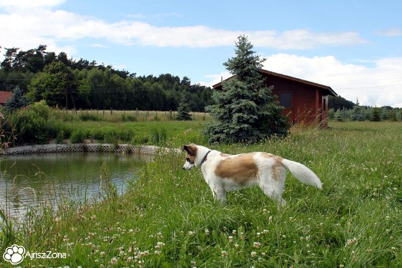 nocleg z psem agroturystyka radawie