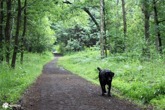 Spacer z psami w Lasach Panewnickich