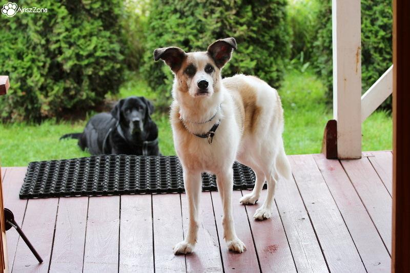 nocleg z psem Dębki, Domki Rainers - domki z kominkiem i z indywidualnym ogródkiem