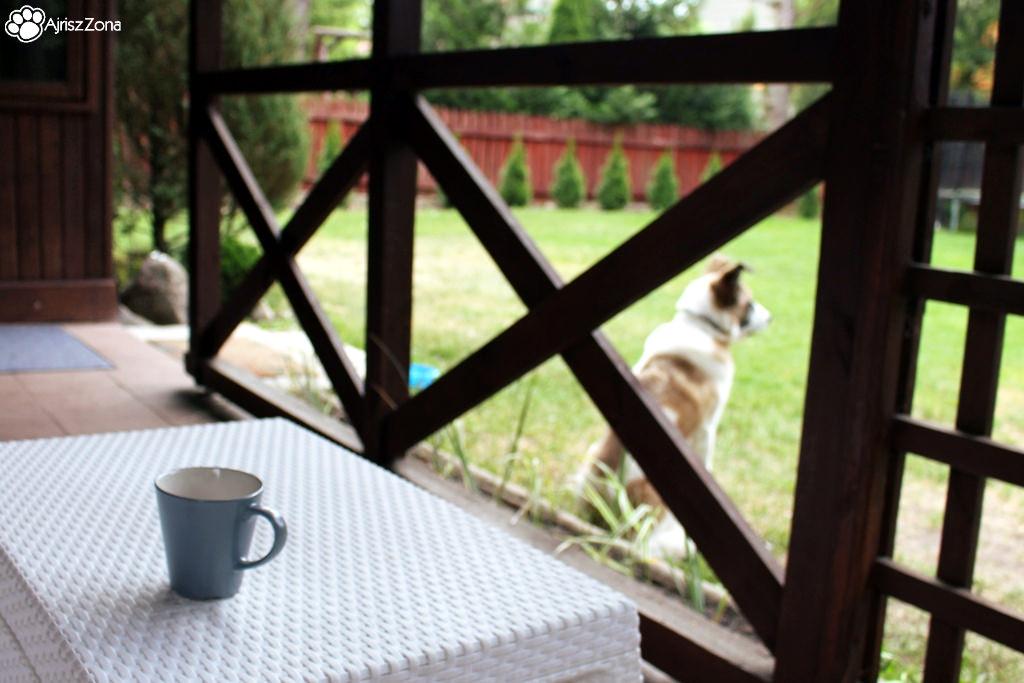 Nocleg z psem - miejsca, które polecamy lub chcemy sprawdzić Wiartel Mały, drewniany domek z kominkiem, niedaleko jeziora i z indywidualnym ogrodem