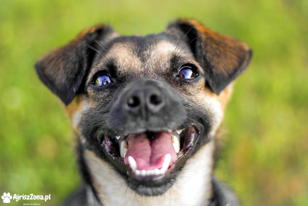fotografia psów Katowice psie sesje