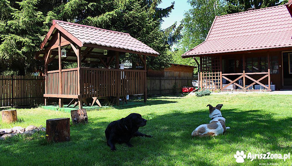 Nocleg z psem - miejsca, które polecamy lub chcielibyśmy odwiedzić. 23 pomysły na nocleg