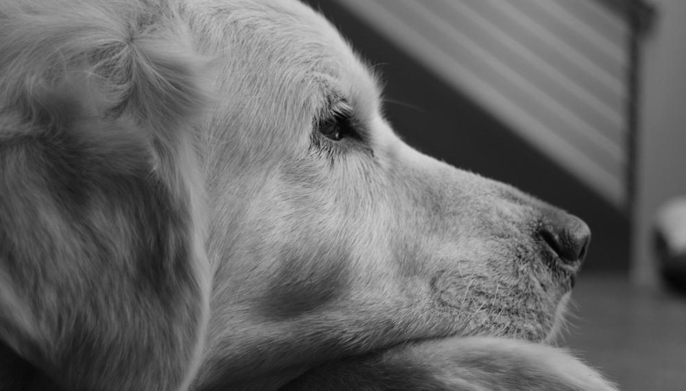 Co mówić i czego unikać po odejściu psa