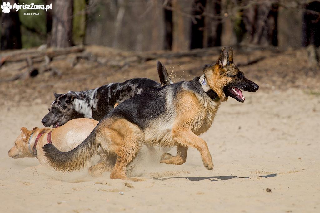 Lasy Panewnickie z psem, gdzie na spacer z psem w Katowicach i na Śląsku