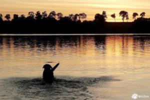 Fotografia psów Katowice, sesje zdjęciowe psów, sesje zdjęciowe z psami