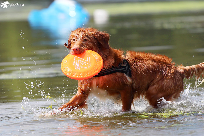 gdzie nad wode z psem na slasku