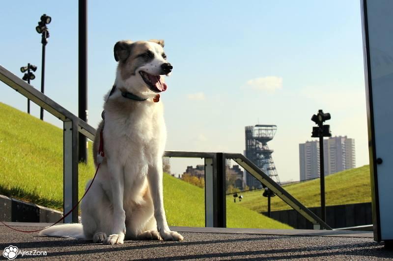 gdzie na spacer z psem na śląsku katowice