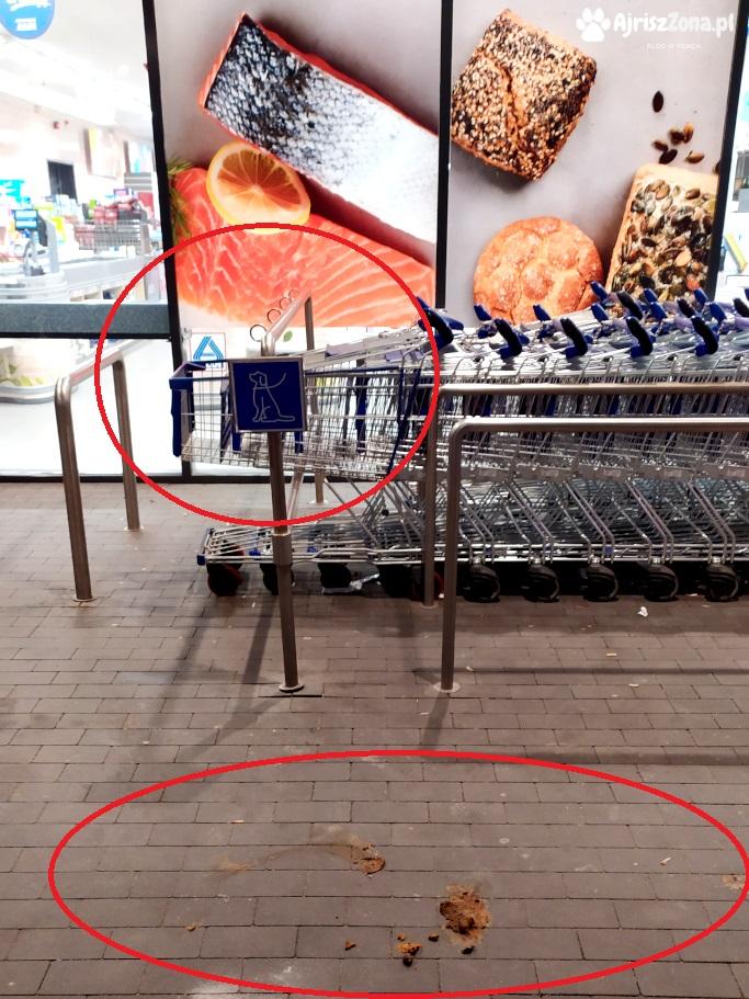 Zostawianie psa pod sklepem i w innym miejscu publicznym ALDI KATOWICE