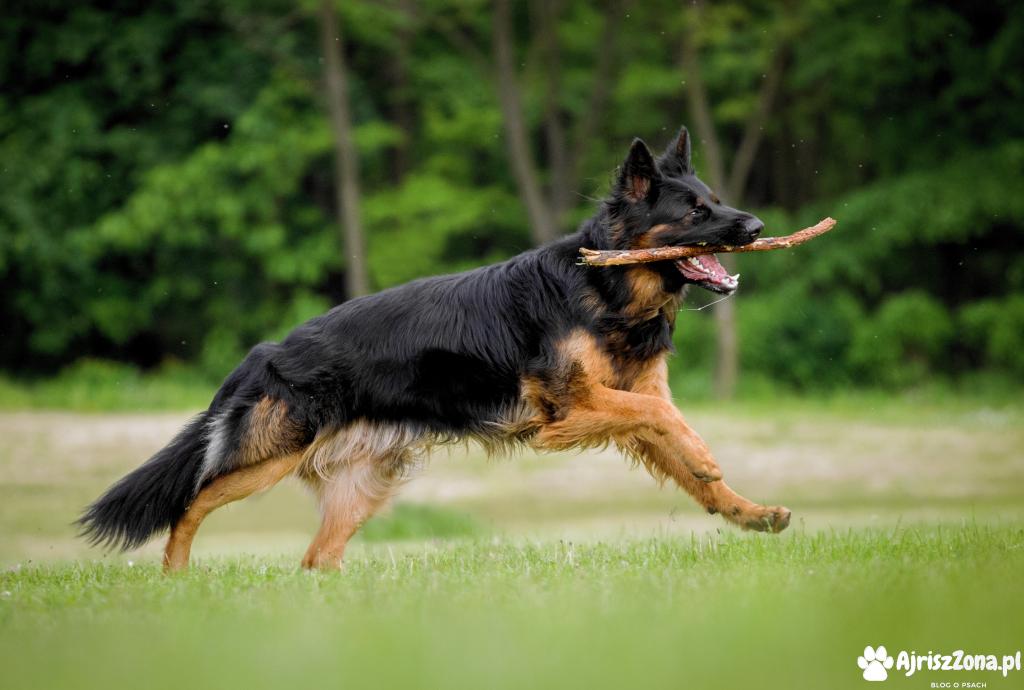 Sesje psów i innych zwierząt fotograf zwierząt