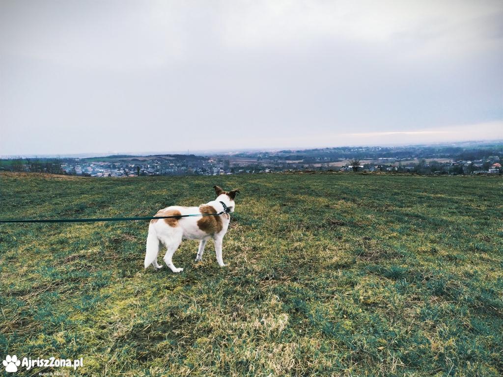 Rogoźnik, Buczyna z psem