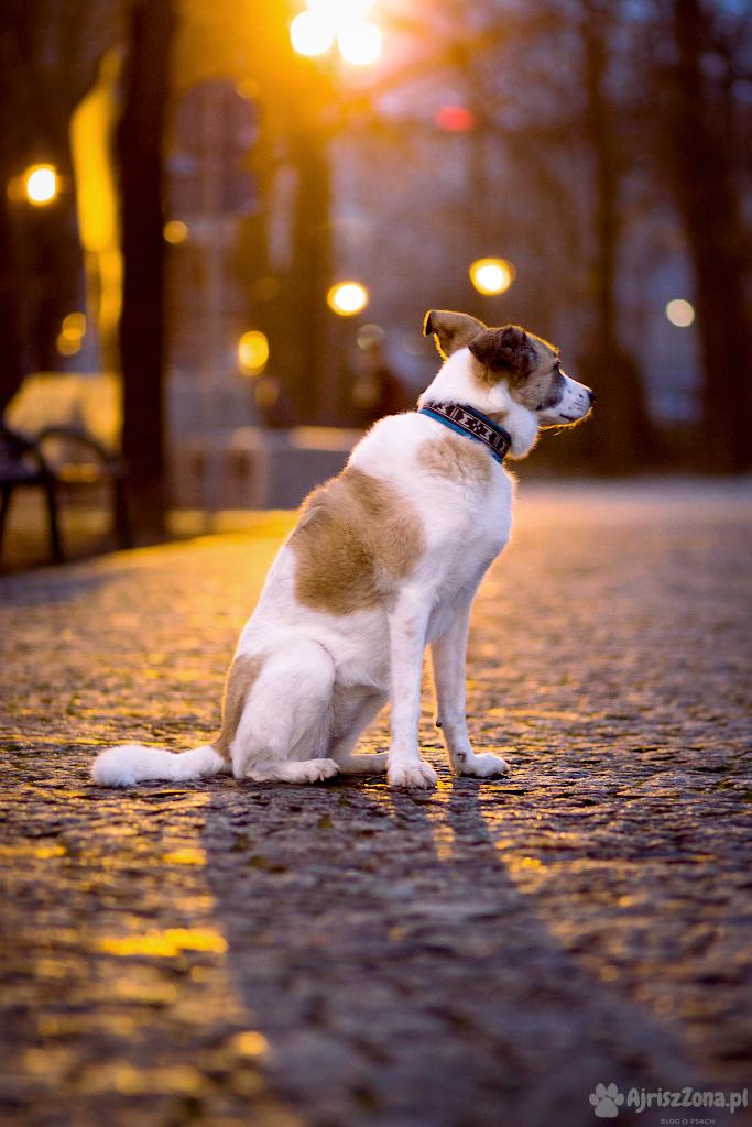 sesje zdjęciowe psów