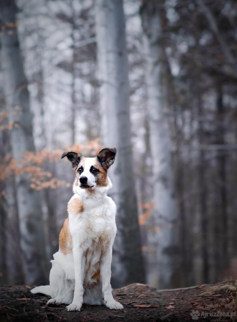 Buczyna, Rogoźnik z psem