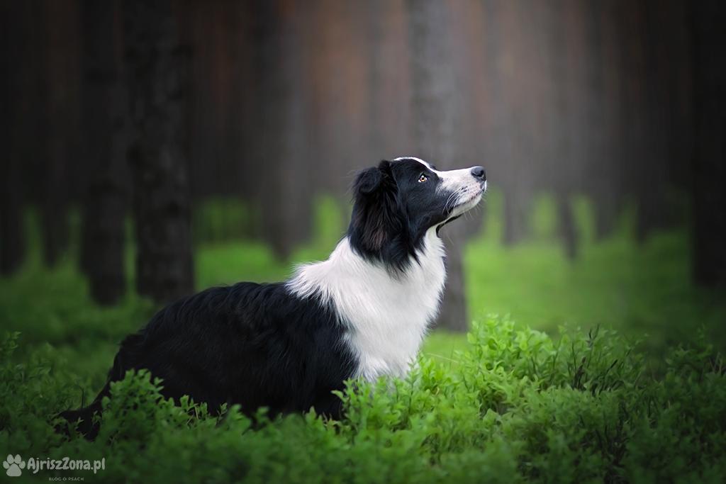 Fotografia psów Katowice - sesje zdjęciowe psów na Śląsku i w całej Polsce 📷