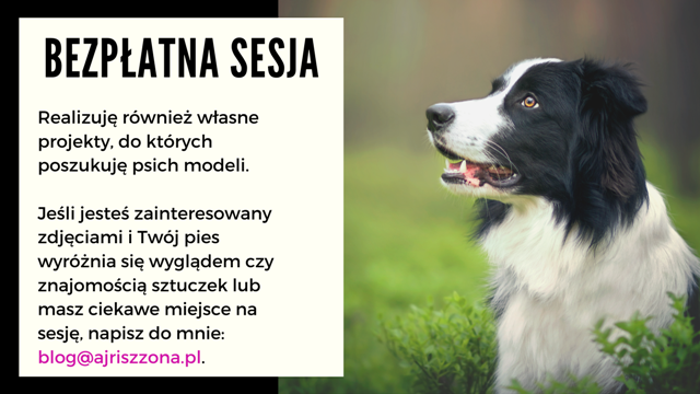 bezplatna sesja zdjeciowa z psem