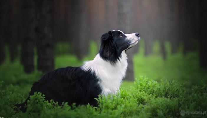 Sesja zdjęciowa z psem w lesie