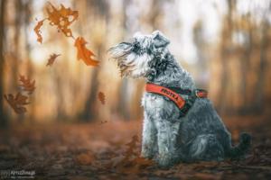 fotografia psów poradnik