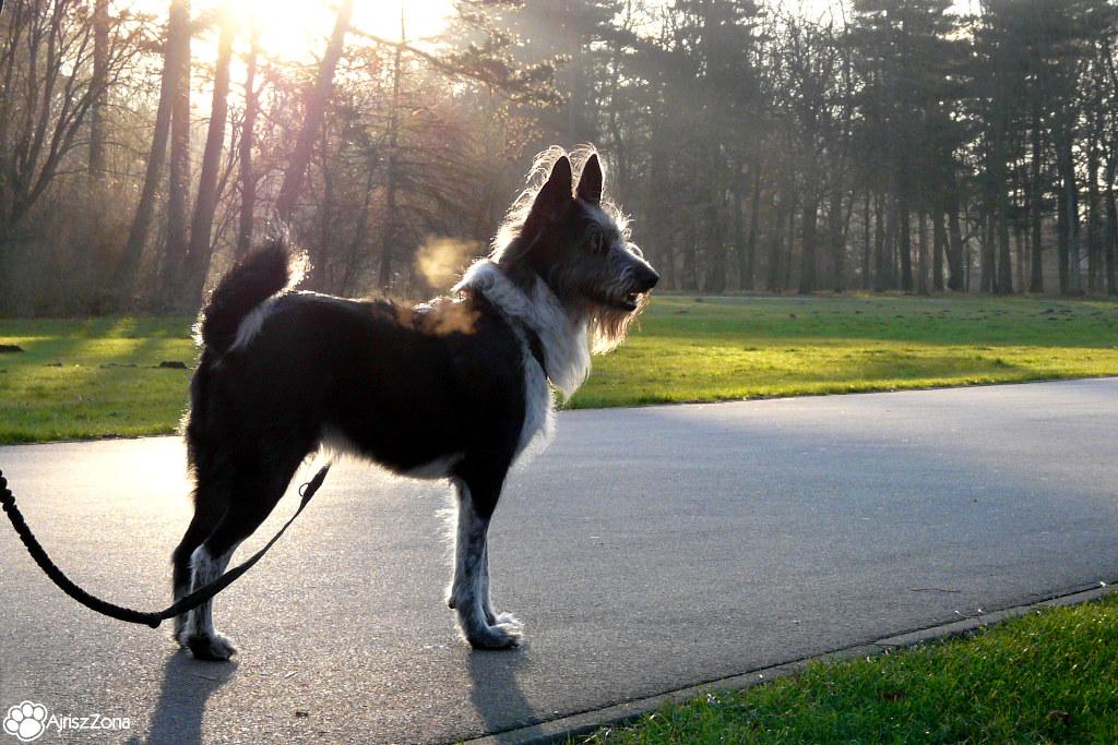 gdzie na spacer z psem śląsk
