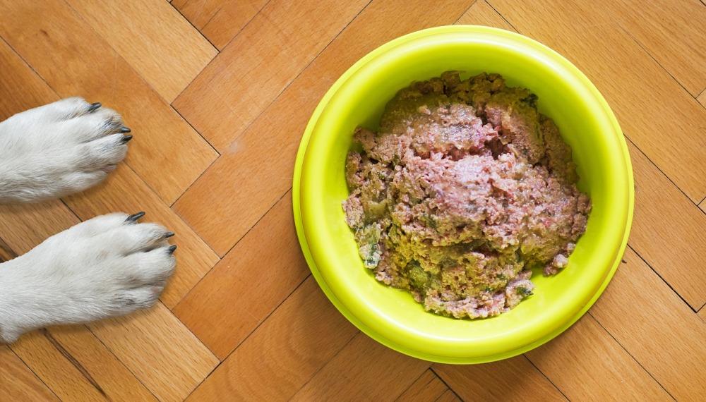 najlepsza karma dla psa, mokra karma dla psa, dobra karma dla psa, dobre karmy dla psa, karma bezzbożowa dla psa, najlepsze karmy dla psów, jaka karma dla psa, karma dla psa mokra, najlepsza mokra karma dla psa