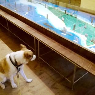Panda w Muzeum Obrony Wybrzeża